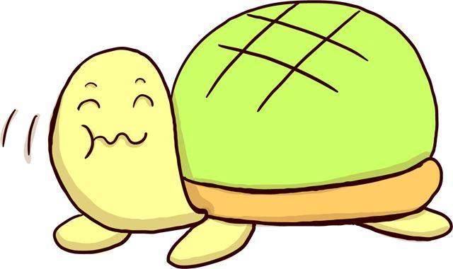 クサガメとミドリガメの寿命はどのくらい どちらが長い やはり亀は長寿なのか Fundo クサガメ アカウミガメ 亀