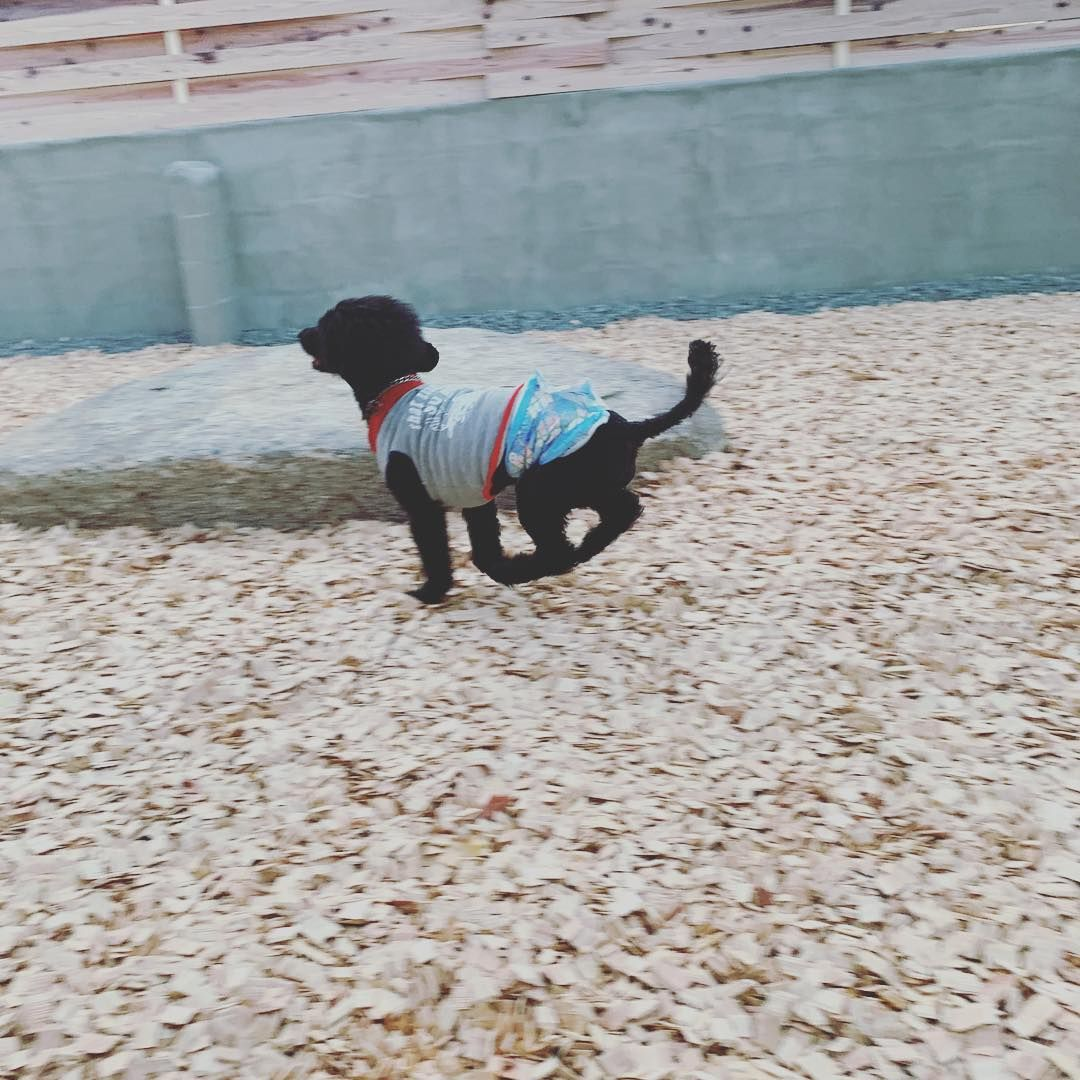 全力で楽しんでます Delight Delight Doghouse ドッグラン ドッグカフェ 宇多津町 犬の理容室 犬の美容室 サイフォン式 待合カフェ 愛犬と素敵な時間をコーディネート トリマー グルーマー ウッドチップに慣れるまでドキドキ 全力で楽しんでます Dog