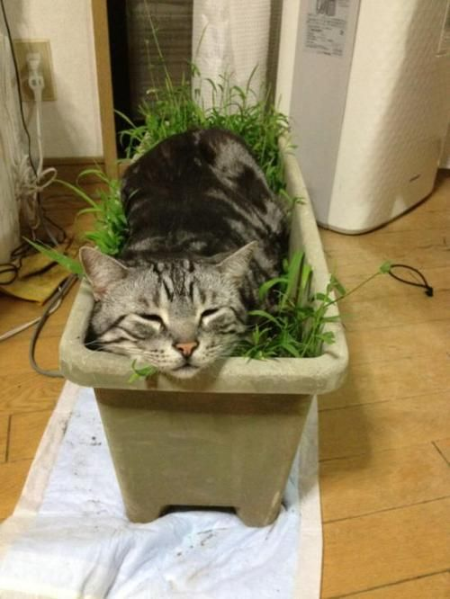 Image result for cats sleeping in window flower boxes