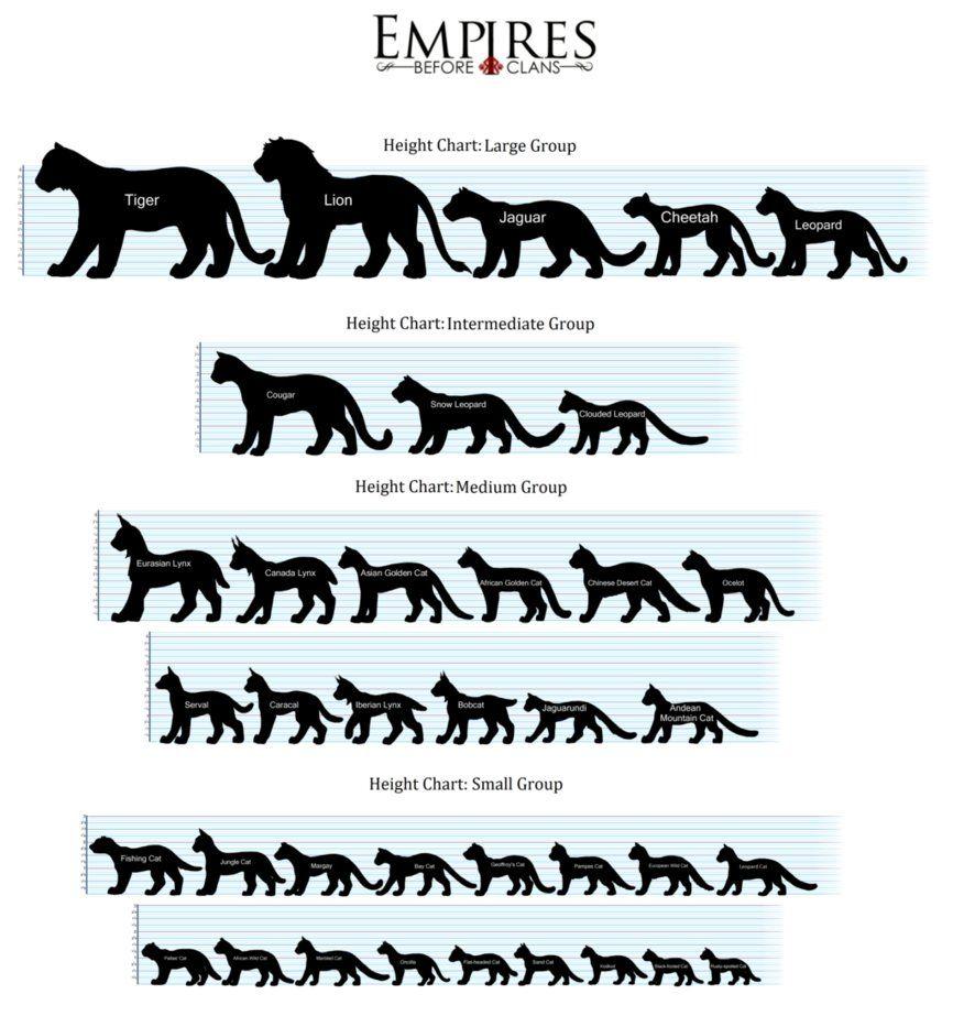 Cat Height Chart (U.S.A.) by EBCAdmins Small wild cats