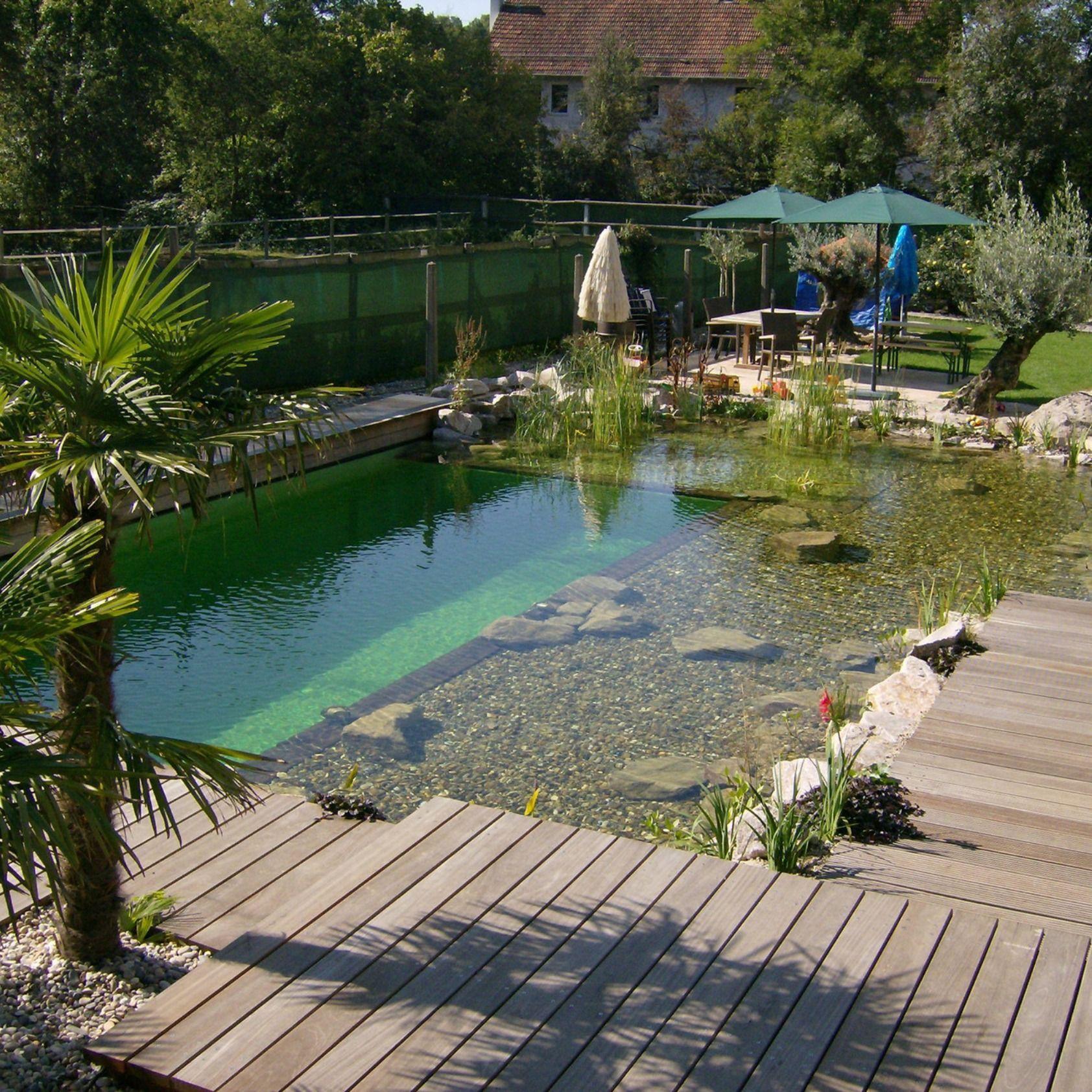 Schwimmteich Ein Traum Von Einem Schwimmteich Wir Werden Oft Gefragt Wie Gross Und Tief Natural Swimming Pools Swimming Pool Designs Pool Landscaping