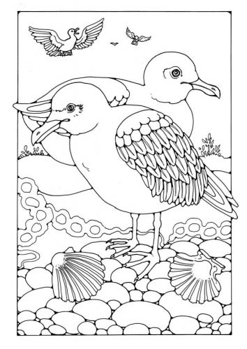 Kleurplaat Meeuwen Bird Coloring Pages Bird Drawings Coloring