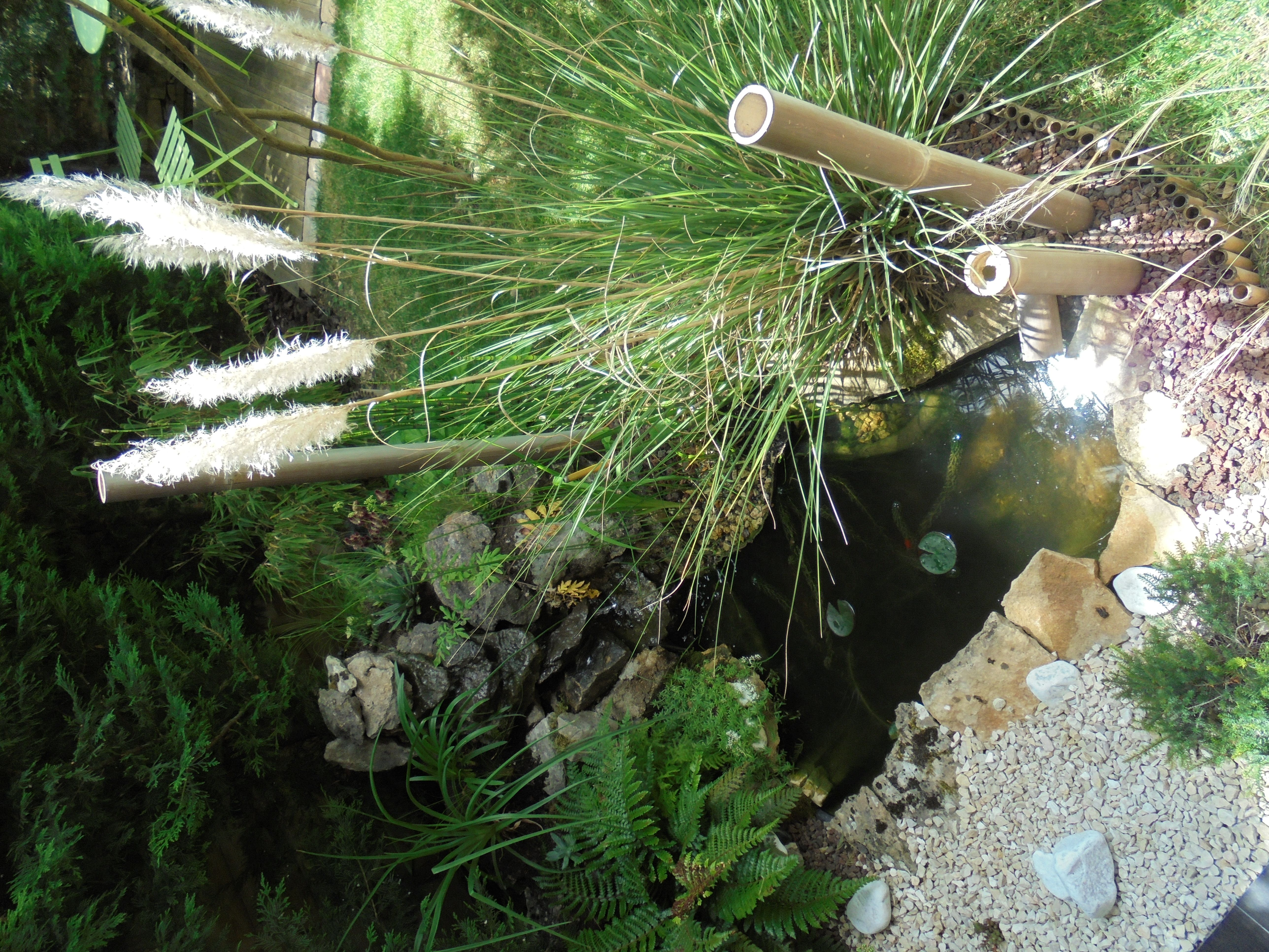 bassin avec cascade | bassin de jardin | pinterest