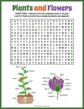 parts of a plant word search word search puzzles word search and vocabulary words. Black Bedroom Furniture Sets. Home Design Ideas