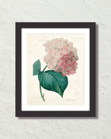 Vintage French Hydrangea Collage Canvas Art Print