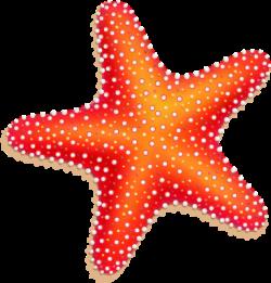 Colorful Seashell Clipart Png Drawing Starfish Sea Star Clipart Royalty Free Download Starfish Clipart Starfish Tattoo Seashell Clipart
