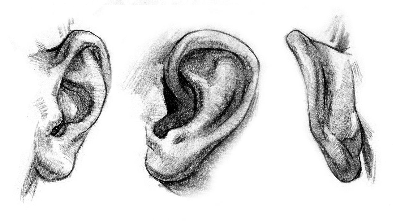 How to Draw Ears – Anatomy and Structure | Pinterest | Ear anatomy ...