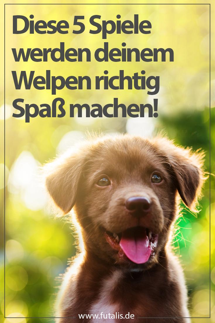 Das Gemeinsame Spiel Mit Einem Welpen Dient Nicht Nur Der Korperlichen Auslastung Des Hundes Sondern Fordert D Welpen Welpenspiele Hunde Welpen Erziehung