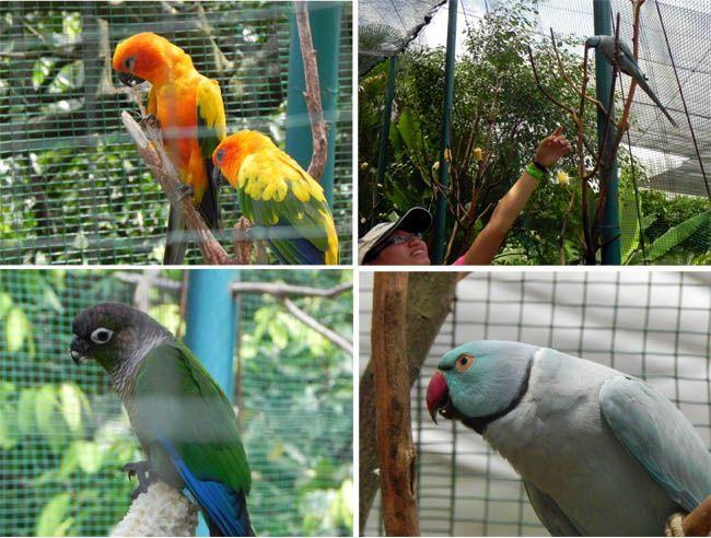 Kuala Lumpur Bird Park Sun Conure Upper Left Green Cheeked Conure Lower Left And Indian Tourist Places Us Travel Kuala Lumpur