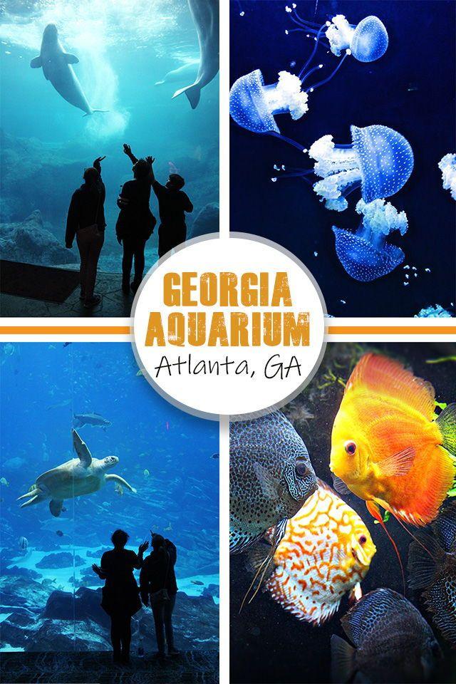Georgia Aquarium in Atlanta, Georgia | Georgia aquarium ...