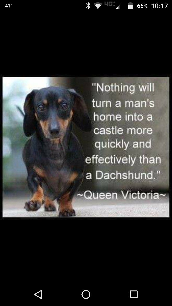 Pin By Carol Weaver On Painting The Town Funny Dachshund