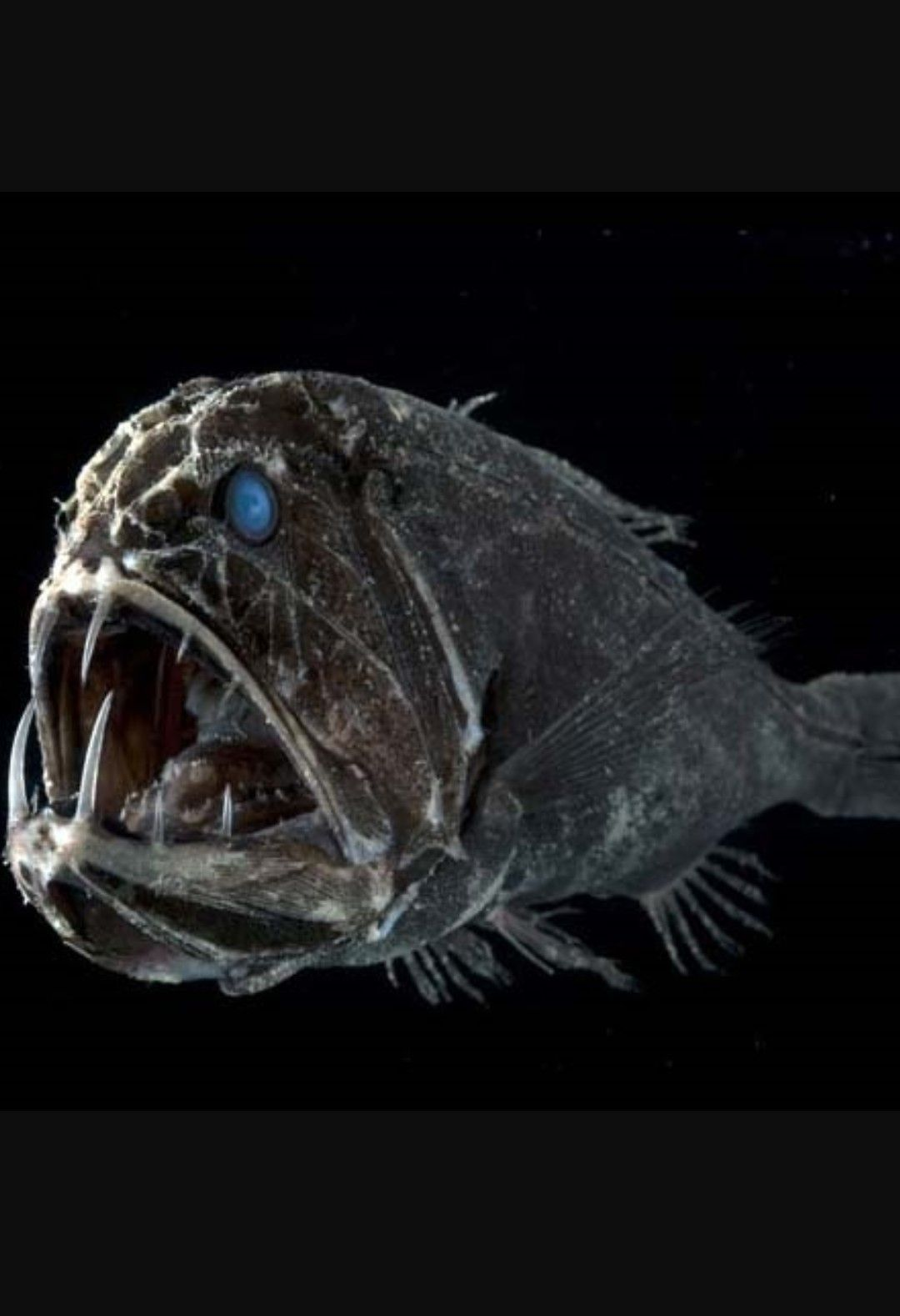 Most Terrifying Deep Sea Creatures List - In The Pitch Black Depths Of The  Ocean Where The Pressure Can Be D… | Deep sea creatures, Sea creatures art,  Sea creatures