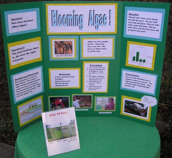 10th grade science fair project on algae | Science fair board