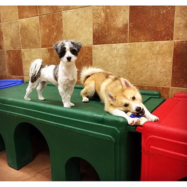 Doggie Day Camp Day Care Petsmart Doggie Day Camp Doggy Your Dog