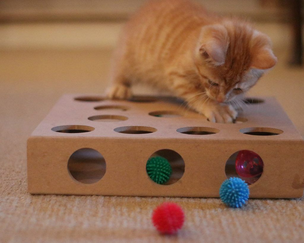 The Best Interactive Cat Toys For Your Clever Active Kitty Kitten Care Best Interactive Cat Toys Kitten