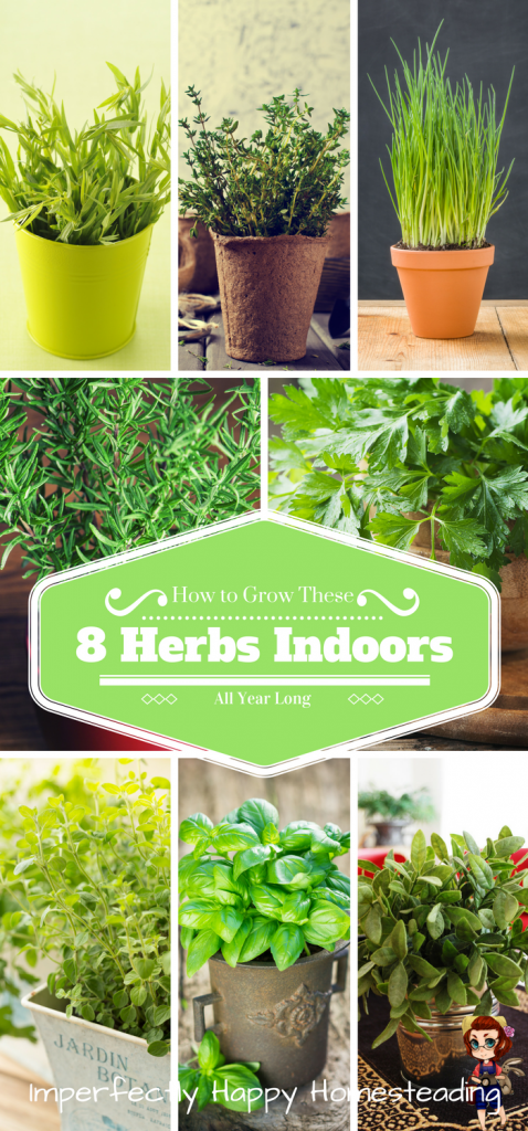 How to Grow 8 Awesome Herbs Indoors All Year Long #herbsgarden