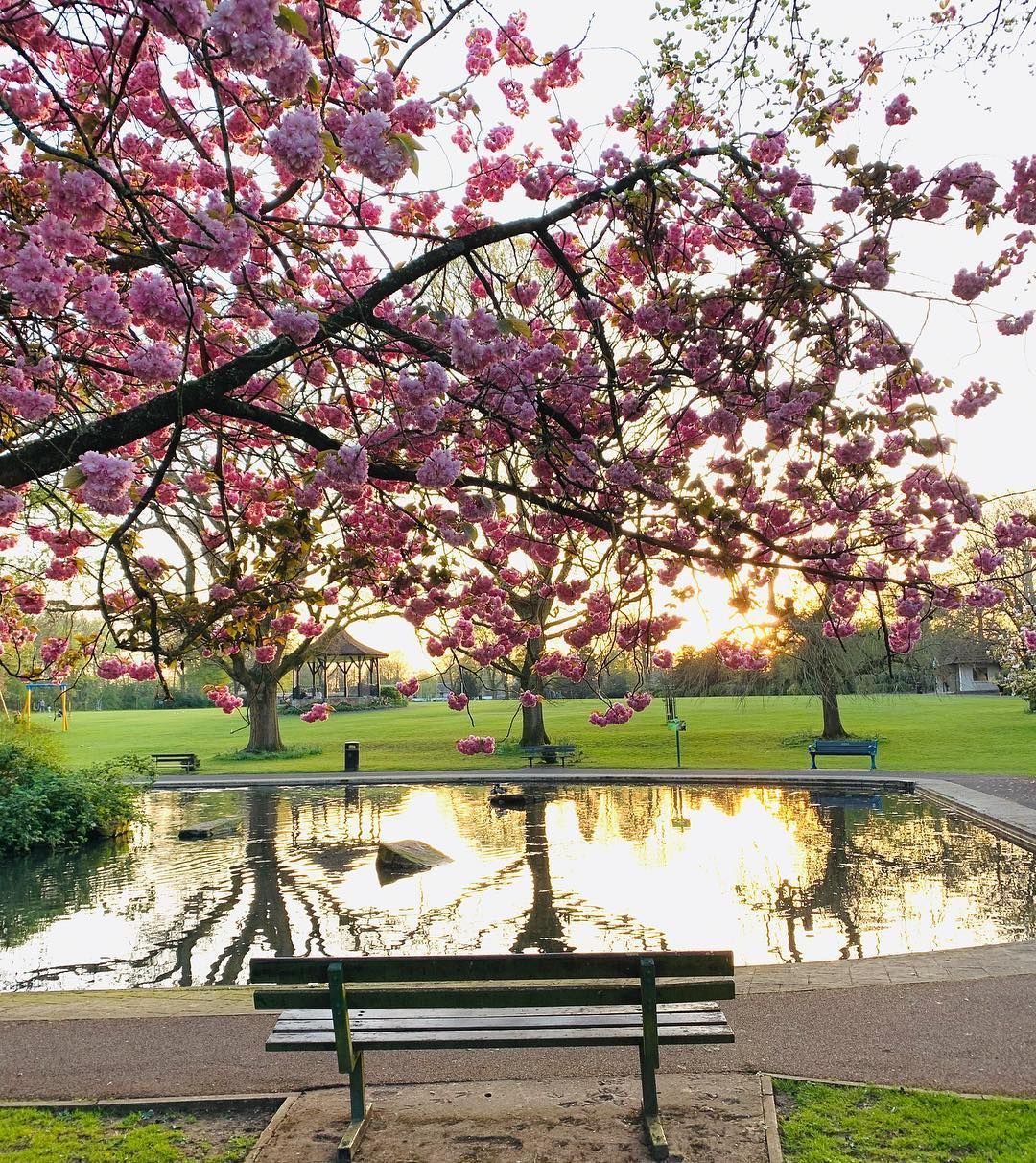 Sunset And Cherry Blossom Photography Somerset Photo Photographer Photoshoot Sunset Sunset And Cherry Blossom Cherry Blossom Blossom Sunset