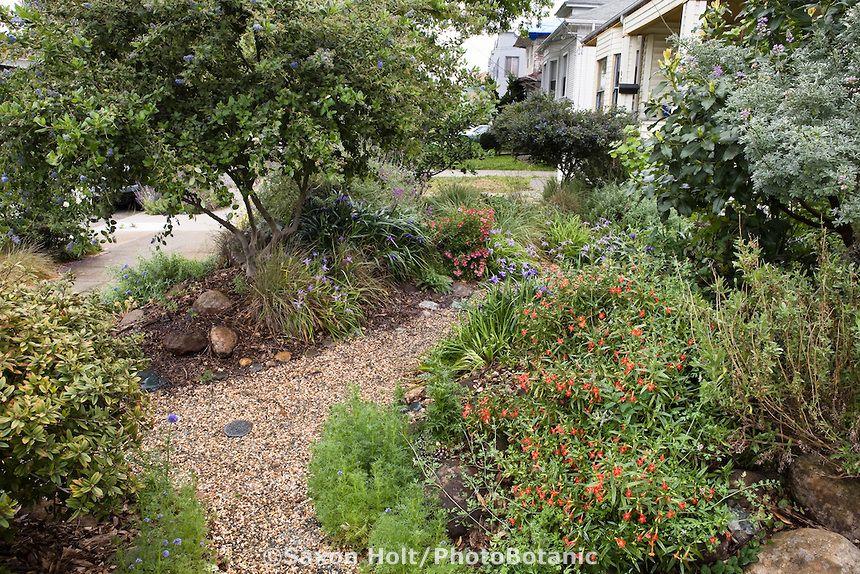 California native plant front yard garden in urban drought
