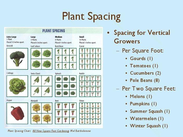 Square Foot Gardening Chart Plants Per Square Feet Chart