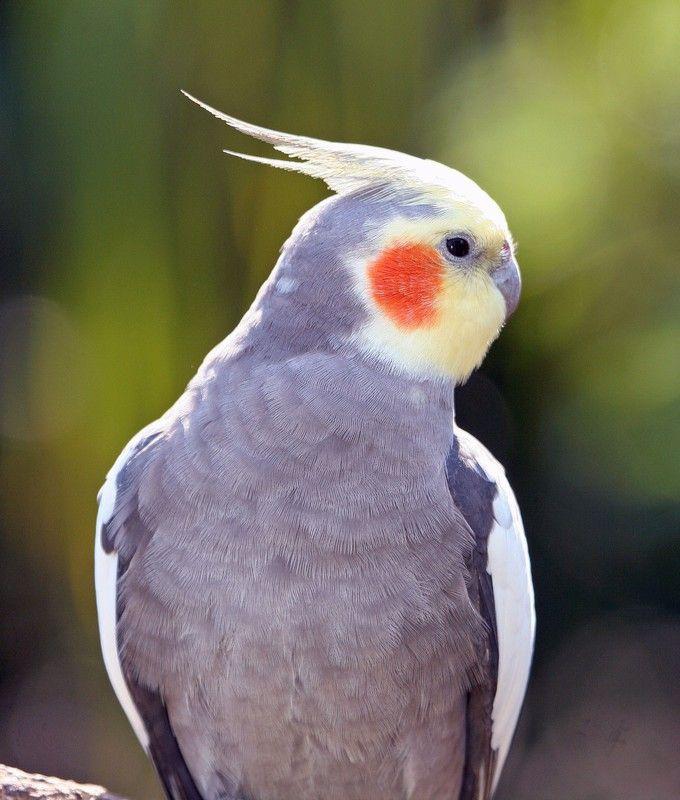 Pin On Birds Birds Birds