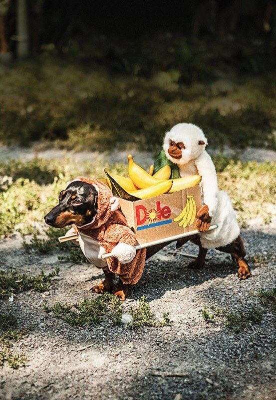 Winning At Dog Fancy Dress Dog Costumes Funny