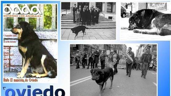 Rufo, el perro de Oviedo.