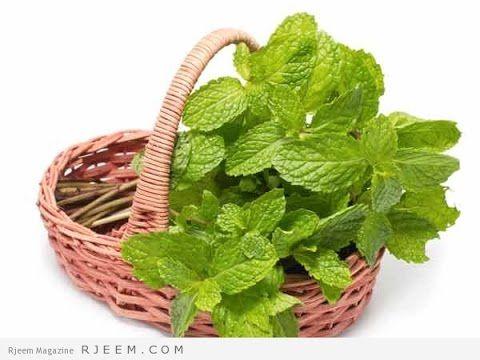 مشاكل زراعة النعناع وحلها Mint Leaves Mint Dark Circles