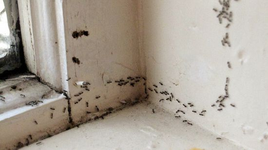These Little Ants Are Driving Me Nuts Get Rid Of Ants Kill