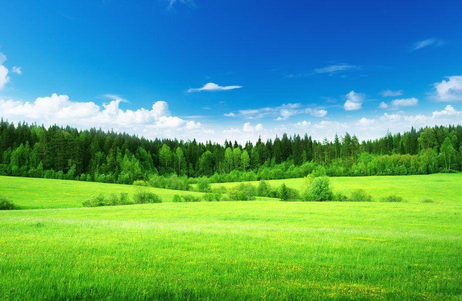 Naturaleza, campo, césped, verde claro, bosque, árboles