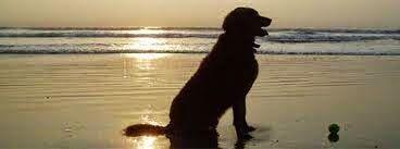 Jet Pet Resort Vancouver Bc Based Dog Resort Is Offering Their Best Dog Boarding Facilities With Some Extra Care Dog Boarding Facility Pet Resort Dog Boarding