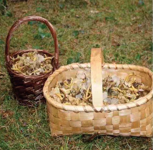 Jornadas de setas en el Valle de Iguña y Anievas. El 10 y 11 de noviembre, 2012    Cantabria   Spain