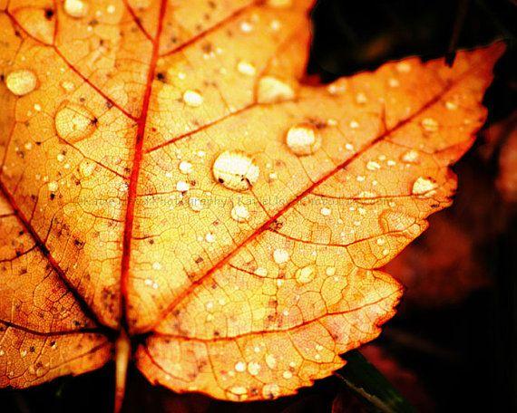 Autumn Pop 16x20 Maple Leaf And Rain Drops By Katielloydphoto Maple Leaf Art Leaf Art Amazing Nature Photography