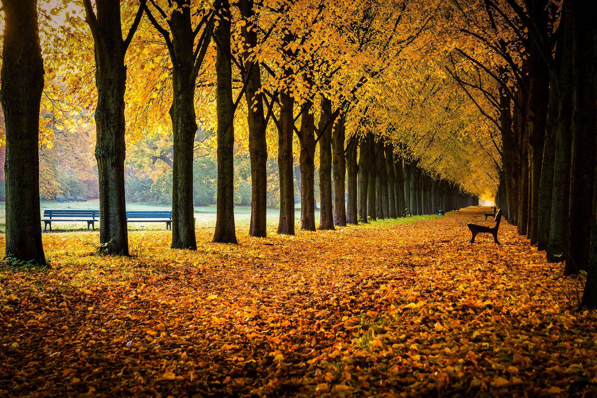 """https://flic.kr/p/B6awdu   """"Goldene"""" Herrenhäuser Allee ...   ... an einem Morgen, Ende Oktober in Hannover"""