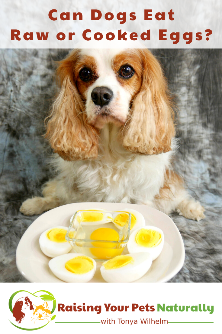 Can dogs eat raw or cooked eggs? in 2020 Can dogs eat