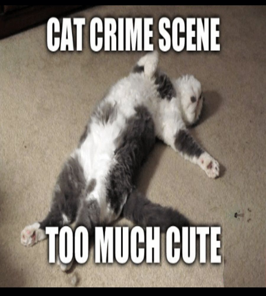 51 Wtf Photos Of Crazy Funny Cats Kittens Funnycat Cats Kitten Mom Funny Cat Memes
