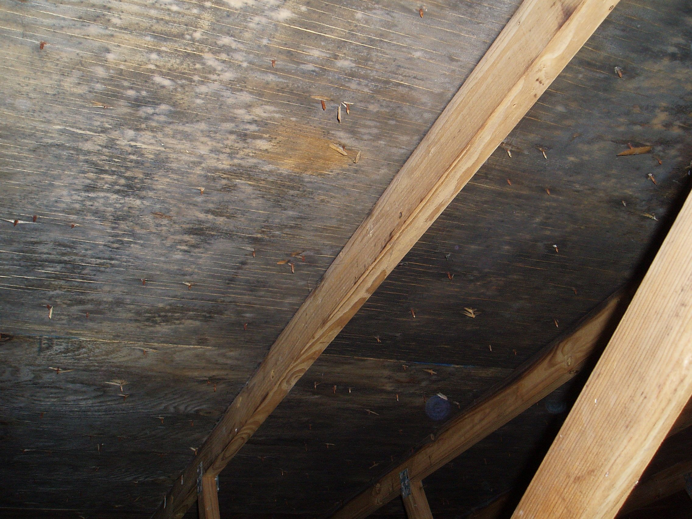 Mold In Attic Caused By Excess Moisture And Poor Ventalation Entryway Tables Molding Decor