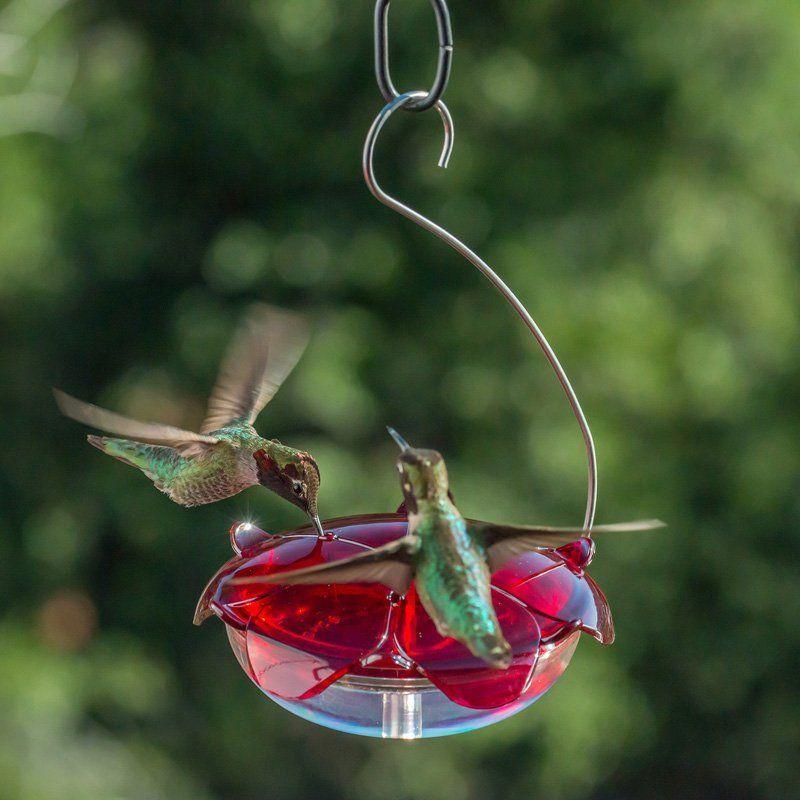 Droll Yankees Clear Ruby Sipper Hummingbird Feeder