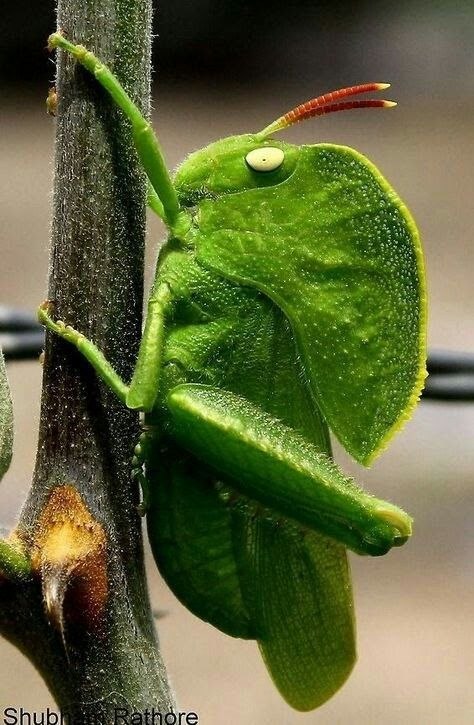 """""""You wouldn't be able to spot me this clearly, if I was amongst green leaves!"""""""