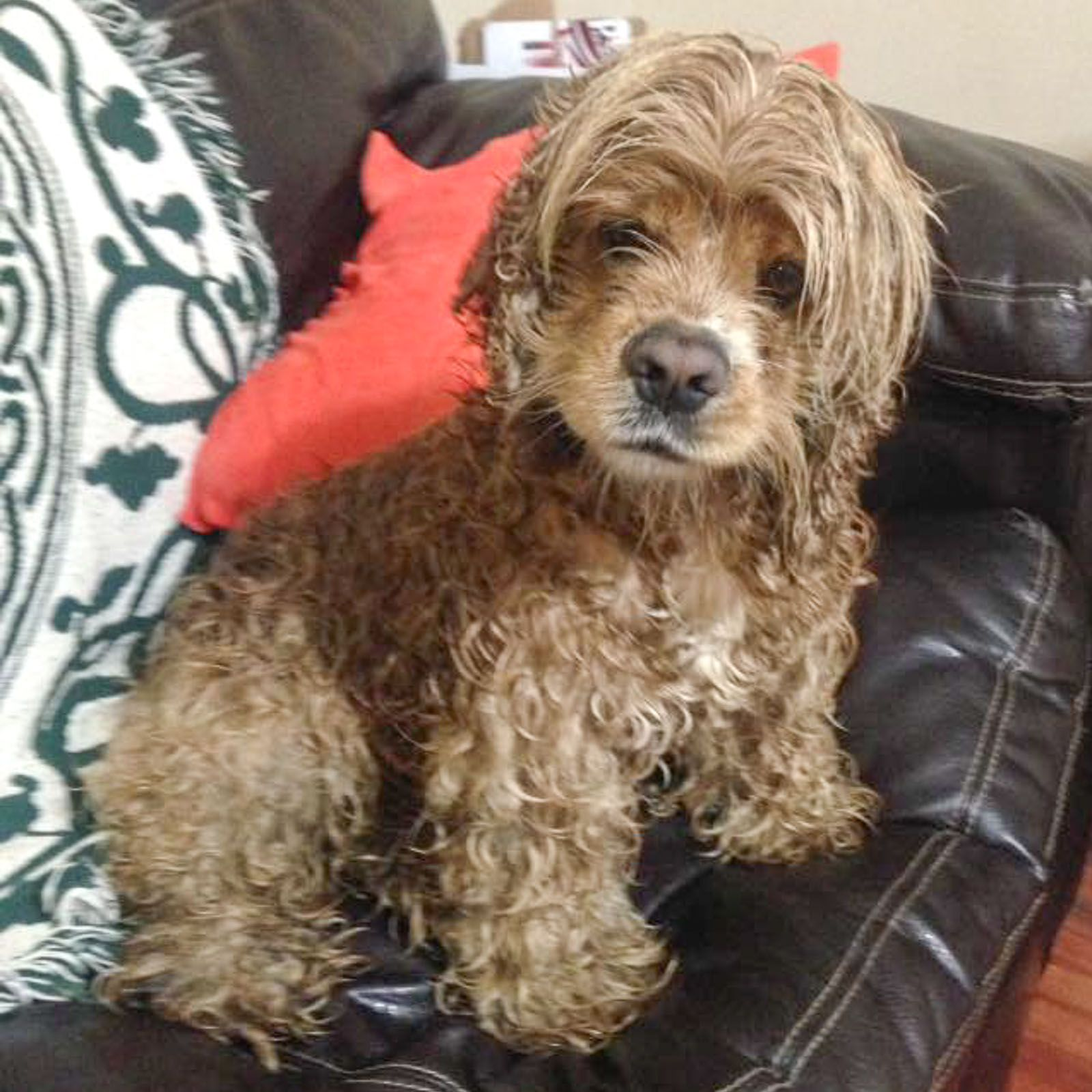 Found Dog Male Middlefield, OH, USA 44062 on April 04