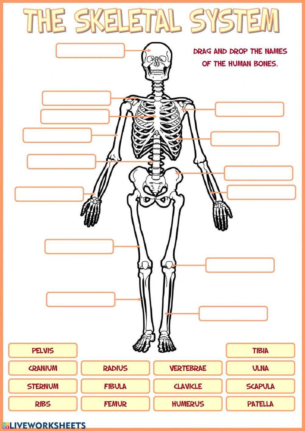 Skeletal System Interactive And Downloadable Worksheet You Can Do The Exercises Online Or Downl Skeletal System Worksheet Skeletal System Kids Skeletal System