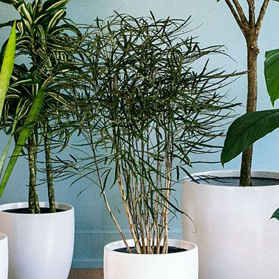 Chic House Plants & Tips on Care | House plants, Plants ...