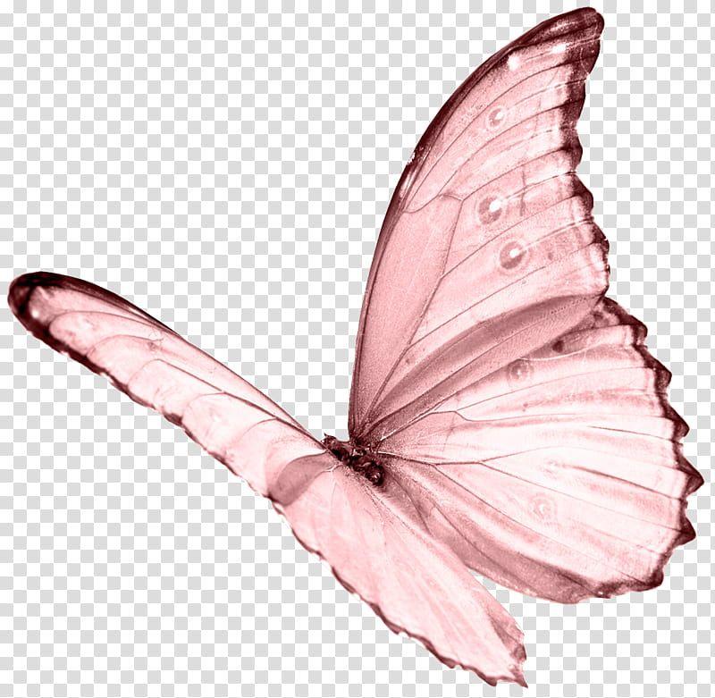 Pink Butterfly Transparent Background Png Clipart In 2021 Butterfly Background Pink Butterfly Butterfly Illustration