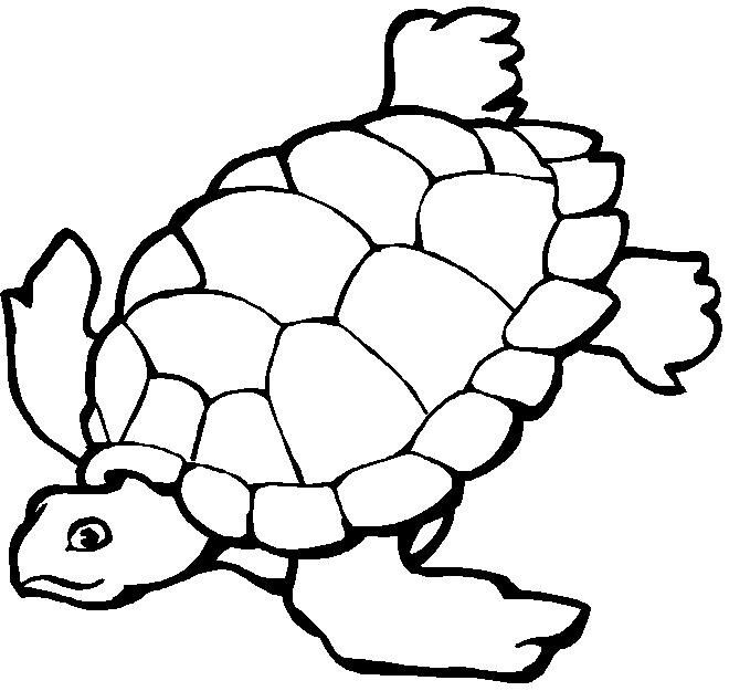 Turtle coloring page   (General) Coloring Pages + Activity sheets ...