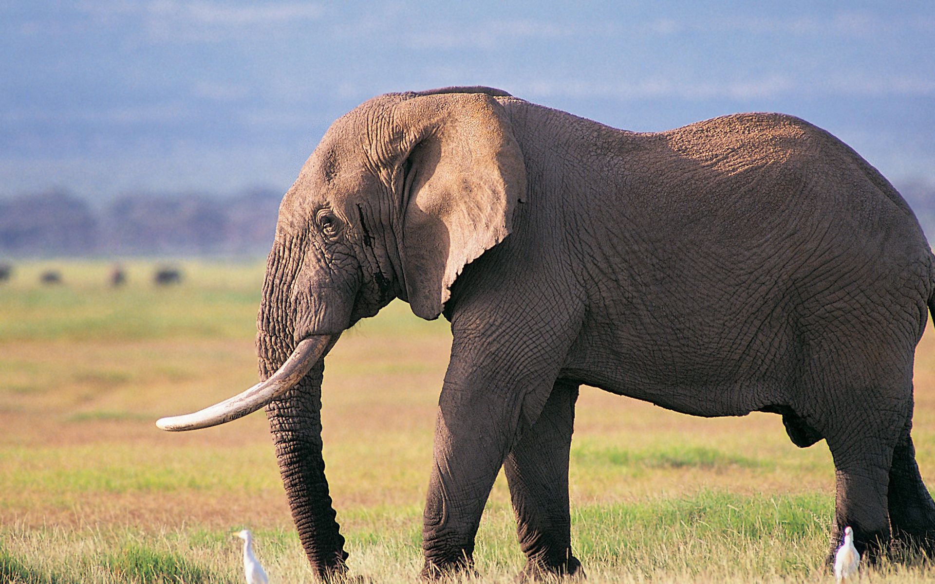 Elephant Art Wallpapers Pictures Animals Elephants