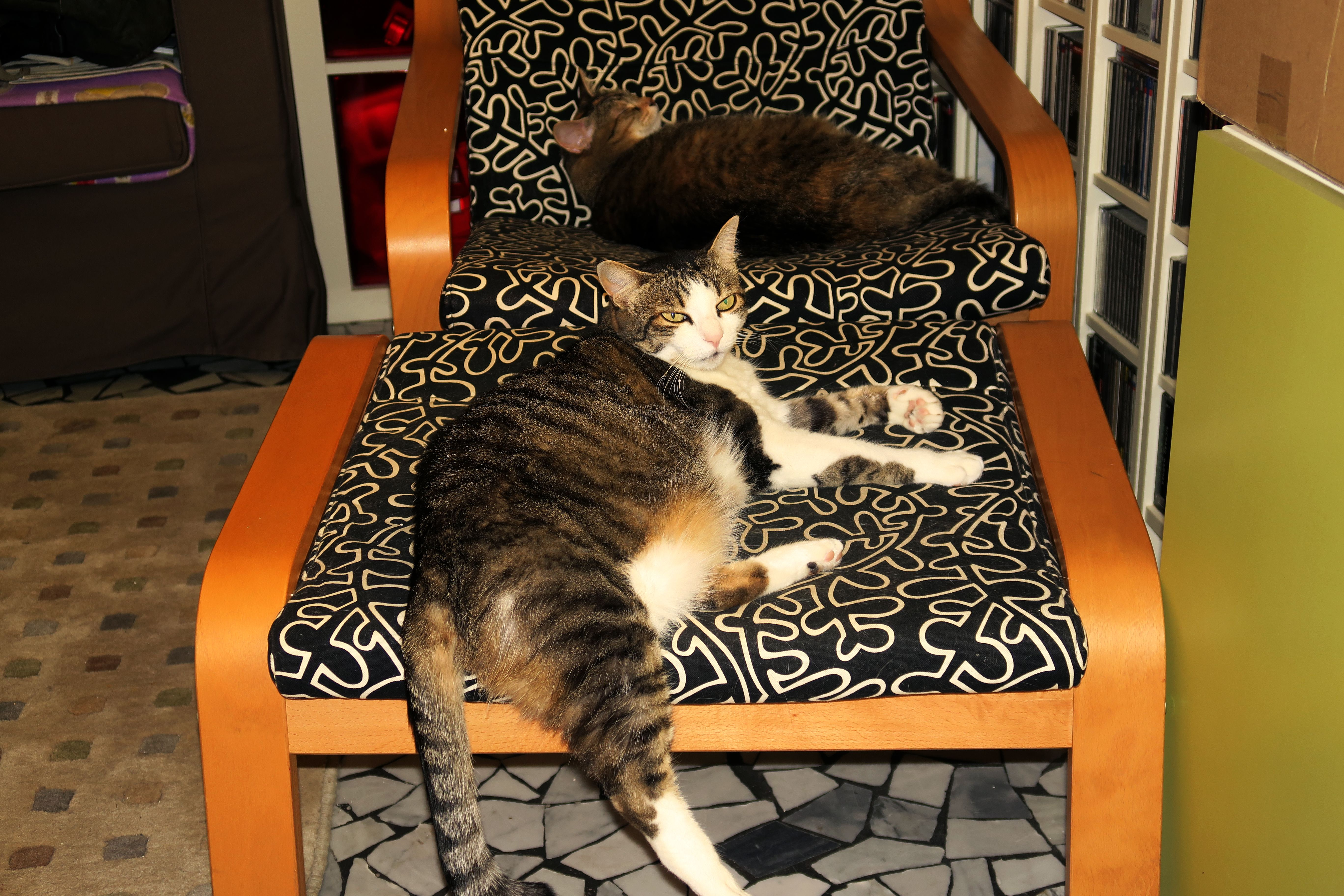 Hey You Get Out Of Dad S Chair With Images Animal Print