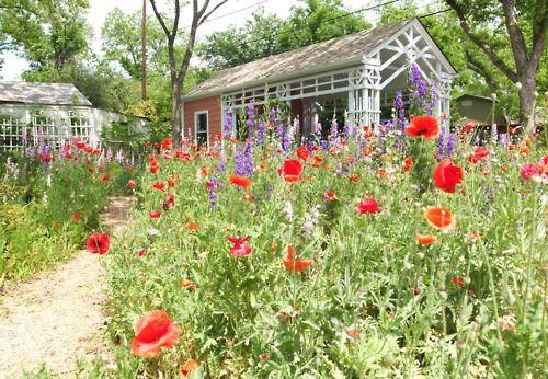 spring has sprung jardines hermosos Pinterest Jardines y Hermosa