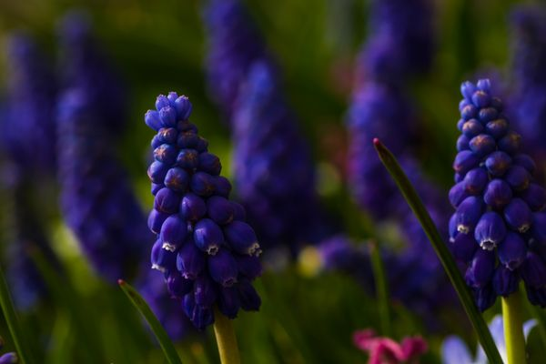 Frühlinsgwiese V