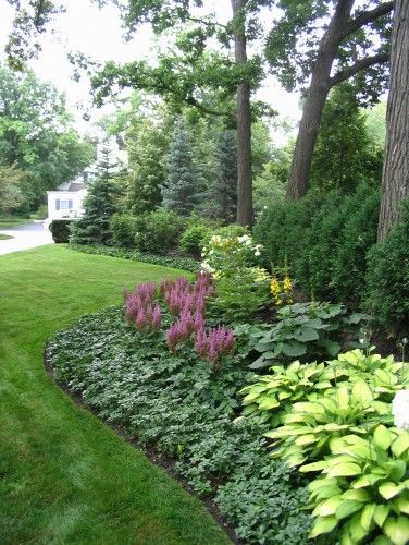 Like the arborvitae, hosta, astilbe and low grow cover | Landscape Design With Astilbe And Hosta Garden on hosta and daylily garden, hosta and hydrangea garden, hosta and caladium garden, hosta garden plans blueprints,