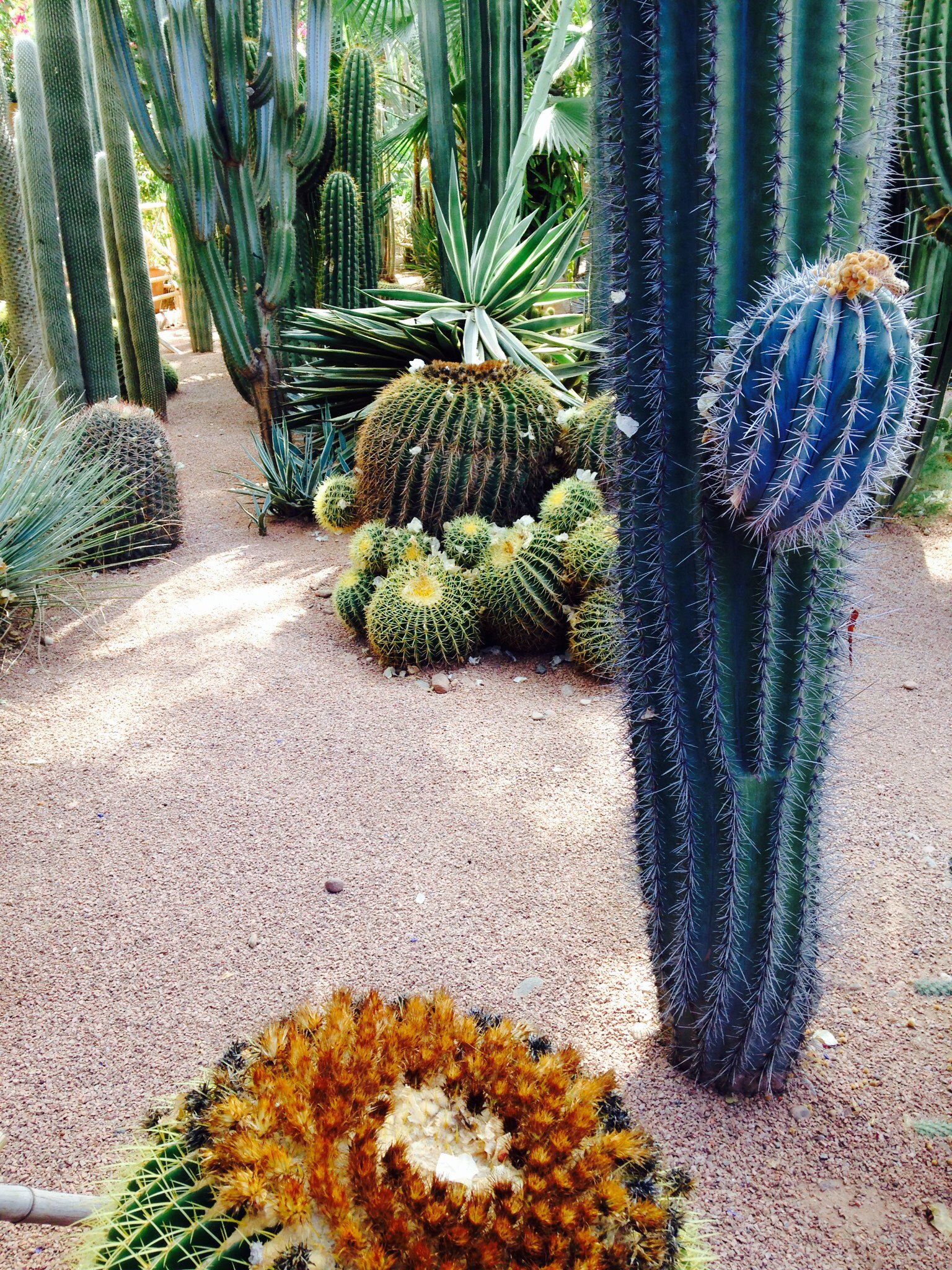 Tropic greens: The taste of Petrol and Porcelain | Interior design, Vintage Sets and Unique Pieces www.petrolandporcelain.com Jardin Majorelle Marrakech