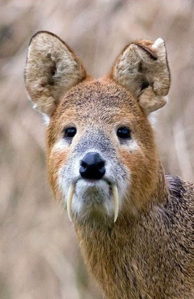 стивену аутистов фотографии самых редких животных соединим овалы вот
